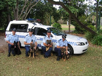 Latest recruits in the QLD Police Dog Squad Tango, Tank, Mase and ...